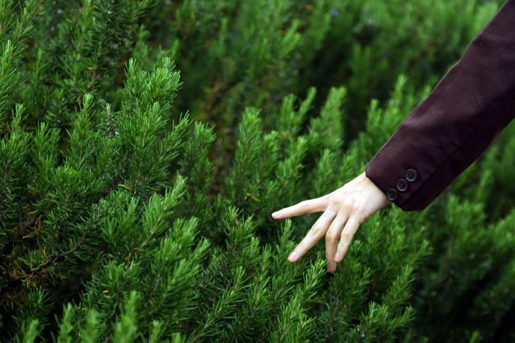 Midsection of woman hand on plants