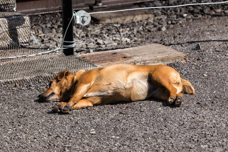 It's a dogs life... Animal Themes Animals Ceredigion Cute Dog  Cute Doggy Day Devils Bridge Dog Doggy Domestic Animals Lay In The Sun Lazy Day Lazy Days Lying Down Lying In The Sunshine One Animal Outdoors Pets Summer Day Train Station Wales
