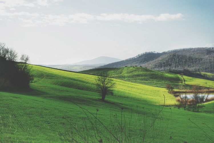 Landscape Landscapes With WhiteWall Landscape Layers Layers Pond Tuscany Italy Early_spring Bare Trees Greenfields Green Hillside Hills