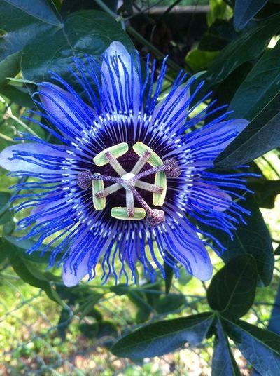 So schön 😍 Flower Beautiful Pretty Sommer Heart