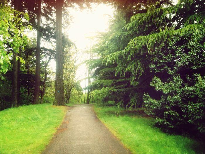 Trees Path The Environmentalist – 2014 EyeEm Awards