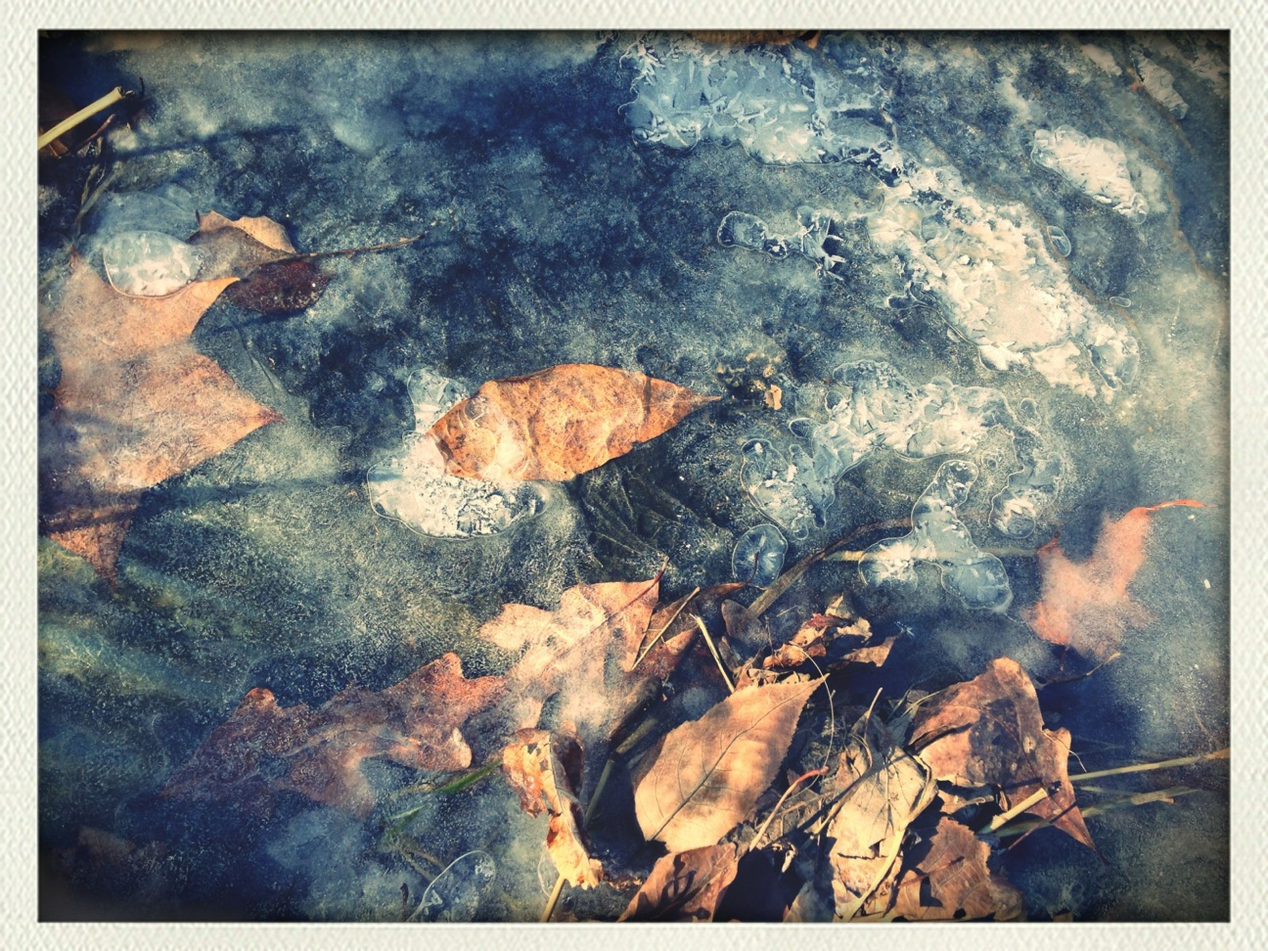 transfer print, auto post production filter, high angle view, leaf, water, dry, nature, close-up, ground, leaves, autumn, outdoors, no people, reflection, fallen, rock - object, day, change, wet, pond