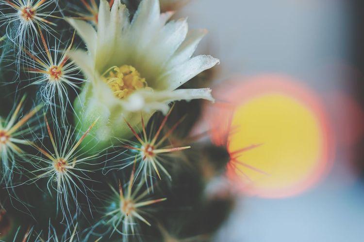 Happy Sunday EyeEm Best Shots EyeEm Nature Lover EyeEm Selects EyeEm Gallery Eye4photography  EyeEm Eyeem Market Thailand Thai Thailand_allshots Cactus Close-up Plant Plant Life