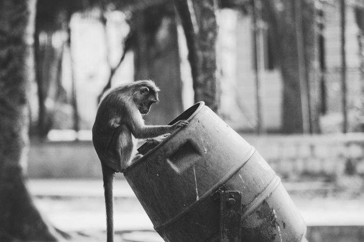 Close-up of monkey on tree