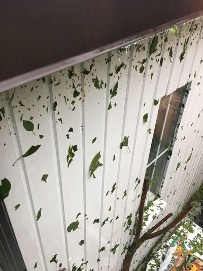 White wall with leaves No People Pattern Indoors  Day Built Structure Wall - Building Feature Close-up Architecture Invertebrate Insect White Color Wood - Material Floral Pattern Low Angle View Nature Textile Animal Animal Themes Ceiling