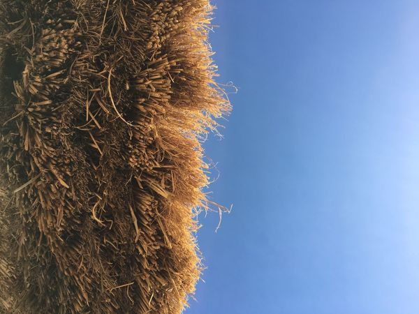Photooftheday Photography Photo Hay Bale  Low Angle View Clear Sky Sky Blue Agriculture Close-up Hay Bale No People Nature Day Field Straw Beauty In Nature Haystack Rural Scene