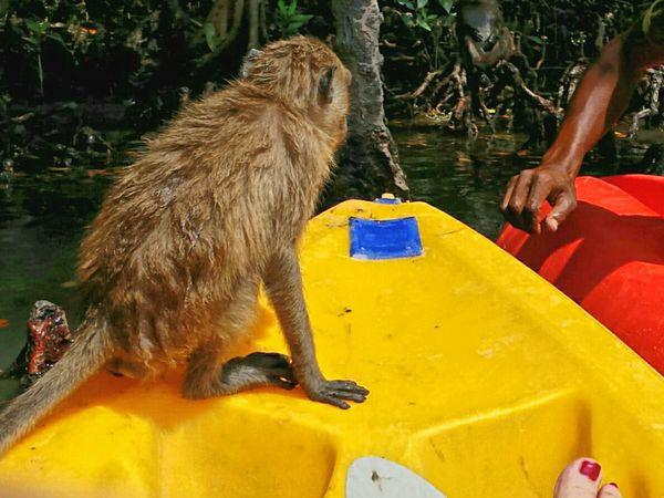 Holiday POV Monkeys Mangrove Life Koh Lanta Holiday Memories Capture The Moment
