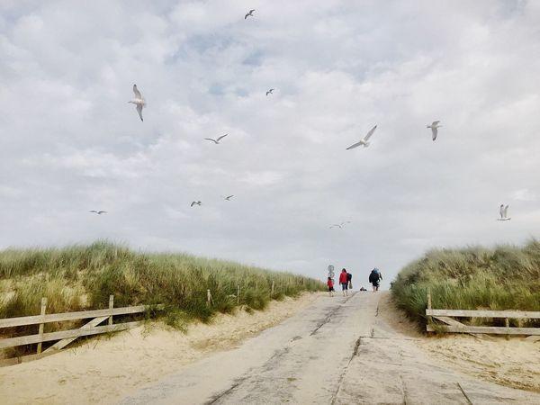 Beach Möwe Nature Landscape Landscape_photography Netherlands