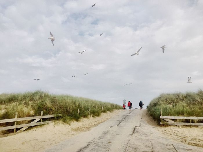 Beach Möwe Nature Landscape Landscape_photography Netherlands