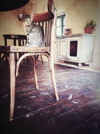 Balcony Credence Old Chair Old Furniture Calm Room Peaceful Athmosphere Old House Old Salföld Felvidek Hungary Balaton Kitty Cat Chair Indoors  Table One Animal No People Built Structure Day Animal Themes Mammal
