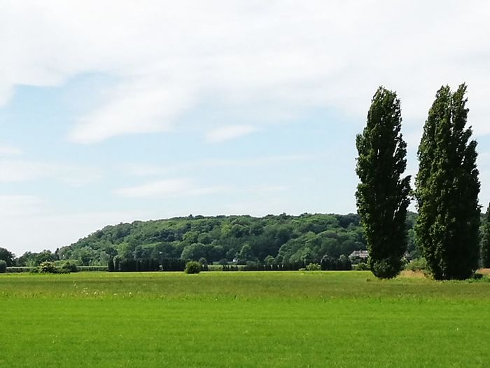 """""""One tiny Dutch mountain"""" Tree Green Color Field No People Agriculture Nature Growth Grass Beauty In Nature Cloud - Sky Rural Scene Tranquility Day Outdoors Landscape Scenics Freshness Lush - Description Sky"""
