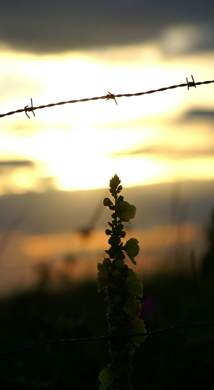 sunset, nature, silhouette, outdoors, no people, barbed wire, beauty in nature, focus on foreground, sky, growth, plant, close-up, water, day