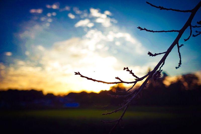 Taking Photos Enjoying Life Sunset Sky_collection EyeEm Japan EyeEm Gallery EyeEm Nature Lover Japan 枝萌え おはようサンセット
