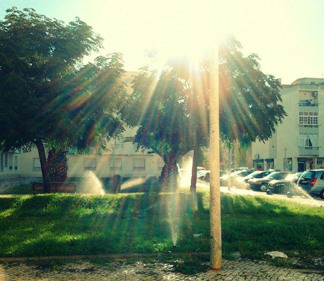 Glitch Sunlight, Shades And Shadows Trees EyeEm Best Shots Good Mistakes Rainbow Colors EyeEm Best Shots - Trees Green Grass Grass Watering The Grass