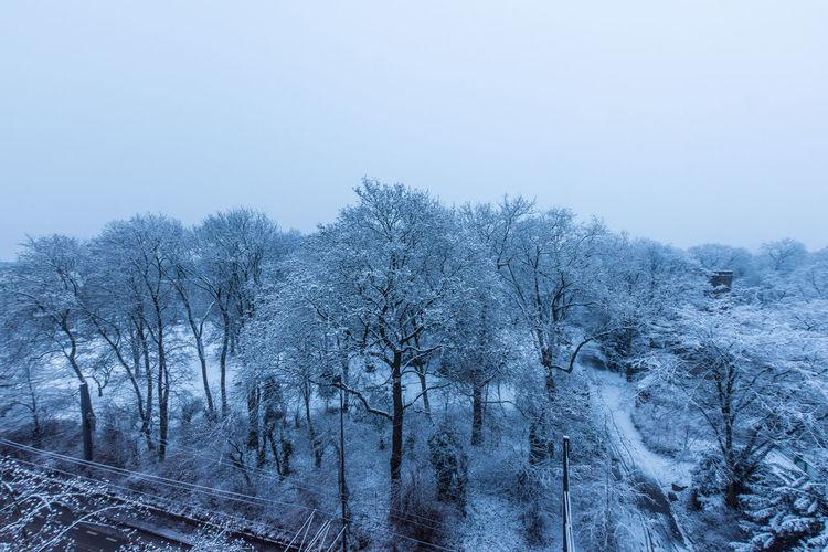 Canoma Photography Cologne Cologne , Köln,  Köln Nature Nature Photography Nikon Nikon D7200 Park Schneelandschaft Sigma1020mm Snow Snow Covered Tree Trees Volksgarten Winter Winter Wonderland Wintertime