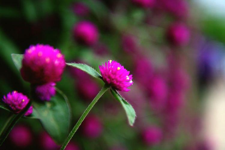 Flower Depth Of
