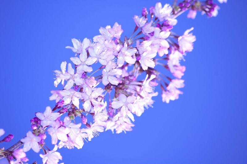 Beautiful Colors Close-up Macro Flowers Color Flowers,Plants & Garden Colorful