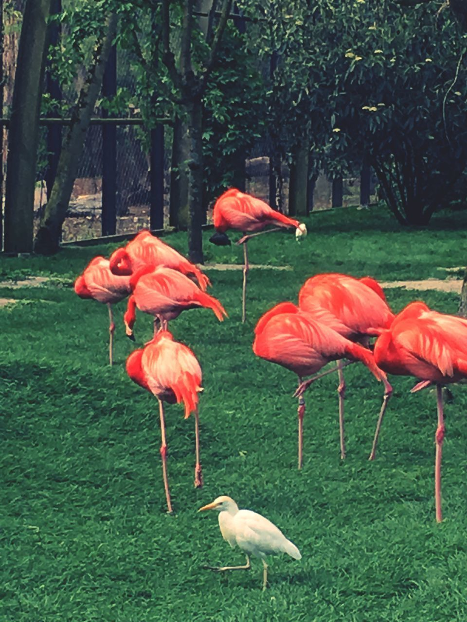 VIEW OF BIRDS ON GRASS