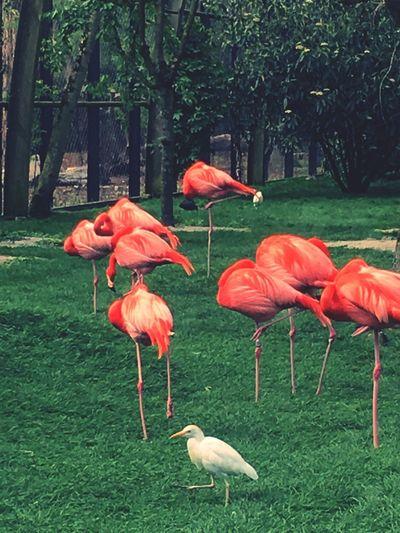 View of birds on grassy land
