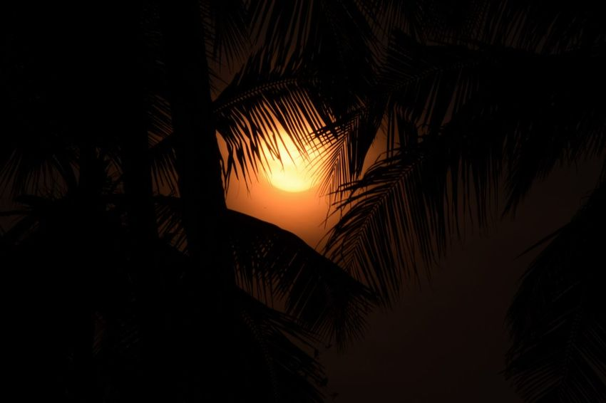 ..alwaYs... bE.. haPpY... witH.. tHe.. liTtLe.. biT.. yOu.. geT.. Nikonphotography Sunset Palm Tree Evening Sky Atmospheric Mood Orange Color The Purist (no Edit, No Filter) My Dream World Close-up Lonesome Expressions Beauty In Nature Kerala Sunset Silhouette Sky Vacations Outdoors Scenics Landscape