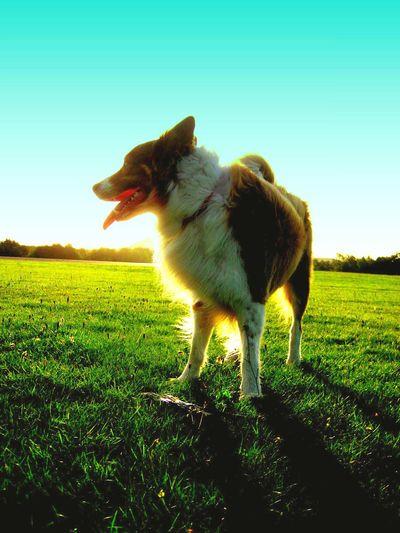 Everyday Joy My Dog Sunlight Grass Silhouette