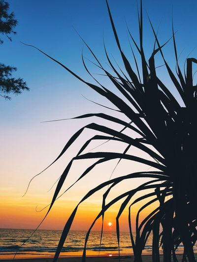 Silhouette plants by sea against sky during sunset