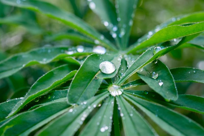 Drop Leaf Green Color Nature Wet Water Growth Plant RainDrop Beauty In Nature Close-up Outdoors Fragility Day Freshness No People One Animal Purity Animal Themes EyeEmNewHere The Great Outdoors - 2017 EyeEm Awards Perspectives On Nature