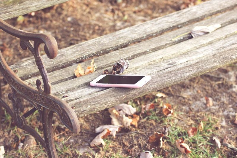 Wood - Material Outdoors Day No People Nature Animals In The Wild Close-up Animal Themes Park Bench Lost Iphone Phone Cover  Autumn Leaves Fall Colors City Life Green Grass Nature Ground