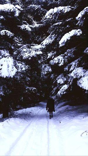 First Eyeem Photo Trip Mountains Road Winter Walk Wintertime Winter Wonderland Winter White Winterroad Whiteroads Adventure Forest Forestwalk Forest Trees Forestphotography Walk