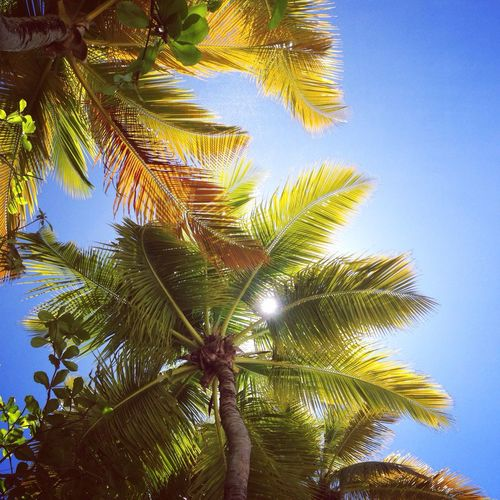 Travel Photography German Photographer Enjoying Life USA VirginIslands Waterisland Palm Trees Summer Vacation Blue Sky Traveling Blue Wave The Great Outdoors - 2016 EyeEm Awards The Great Outdoors With Adobe