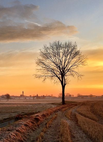 Sunset Sky Tree Beauty In Nature Plant Tranquil Scene Scenics - Nature Tranquility Landscape Nature Field Land Orange Color Outdoors Single Tree Cloud - Sky