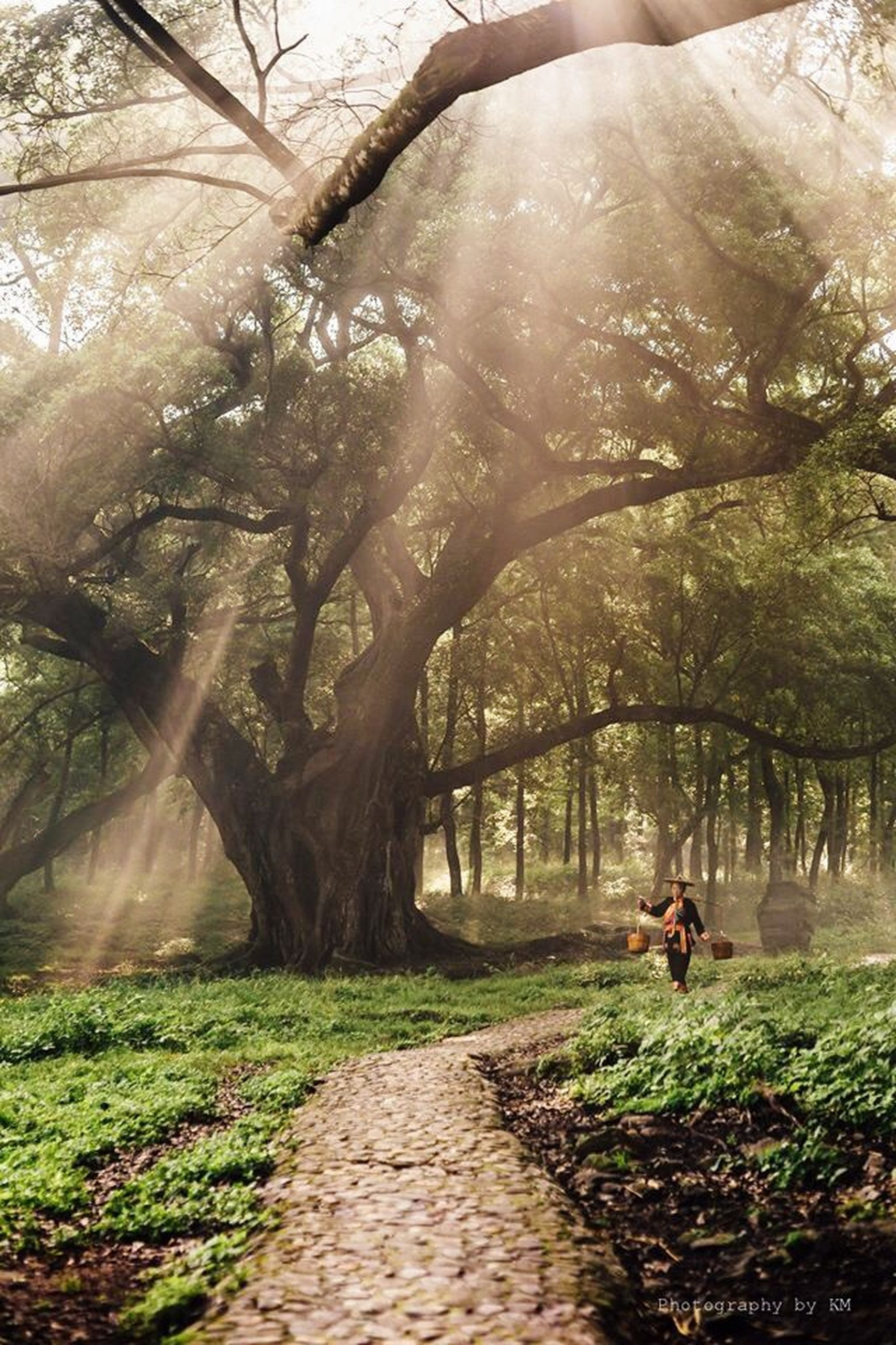 tree, the way forward, footpath, lifestyles, leisure activity, men, person, pathway, growth, walking, park - man made space, grass, rear view, walkway, nature, branch, sunlight, full length