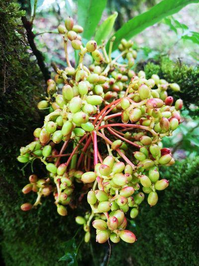 nut Flower Tree