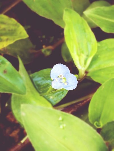 Plant Nature Green Color Beauty In Nature Flower Colorful Illuminated Photography Rural Scene Petal