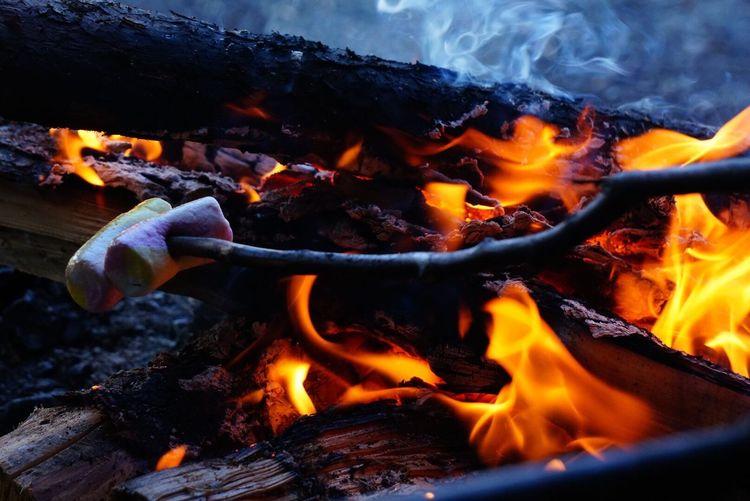Marshmallows on sticks over bonfire