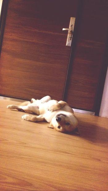 Cute♡ Sleepy Time Bello N Diamond