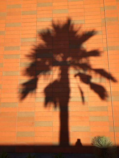Adapted To The City Brick Brick Wall Day Focus On Shadow No People Outdoors Outside Palm Tree Palm Trees Shadow Shadow On The Wall Shadowplay Shadows Silhouette Silhouettes Silhouettes Of Trees Tree Wall The City Light