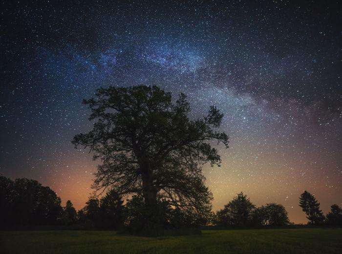 Bavaria Bavarian Alps Bavarian Landscape GERMANY🇩🇪DEUTSCHERLAND@ Green Long Exposure Milky Way Night Night Photography Nightphotography Nightshot Saxony Star Stars Tree, Nature Trees
