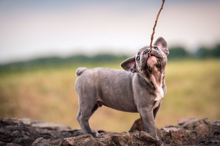 Nature Taking Photos Canine Day Dog Domestic Domestic Animals Focus On Foreground Full Length Land Looking Looking Away Mammal Nature One Animal People Pets Rock Solid Standing