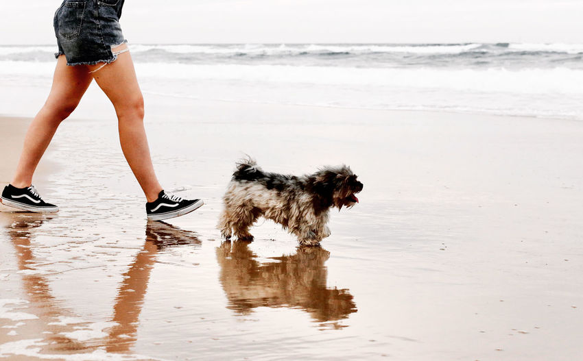 Low section of woman with dog on beach