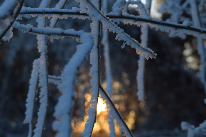 Winter Cold Temperature Frozen Snow Focus On Foreground Outdoors Evening Mood Sun Sunbeam Bokeh December 2016 It Is Cold Outside How's The Weather Today How's The Weather Today? Autumn 2016 The Places ı've Been Today Winter Is Coming... Showcase December First Touch Of Winter Frosted Leaves Frozen Frost Forest Tranquil Scene Winter