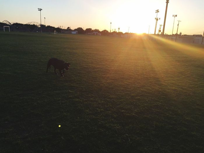 Sora 😍 Dog Love entire field to ourselves, quiet, good weather. Perfect Sunset
