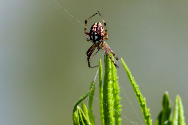 Close-up of spider on a plant