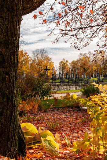 Scenic view of park against sky during autumn