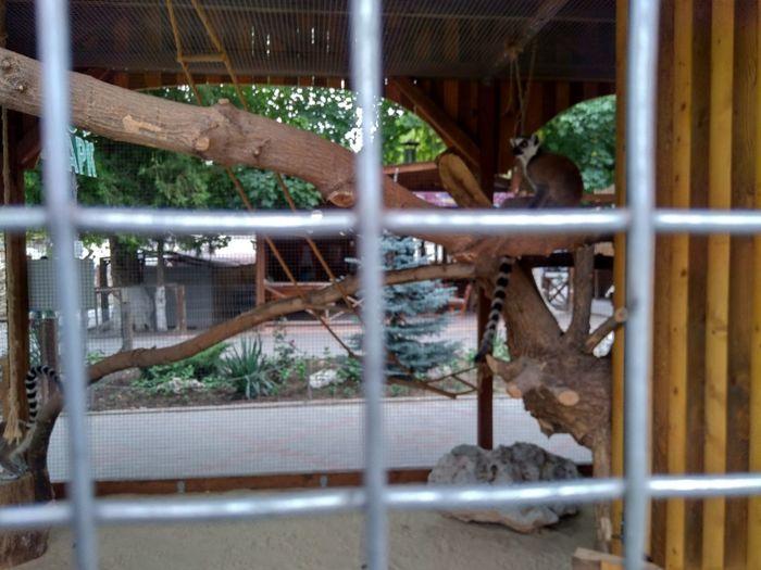 lemurs EyeEm