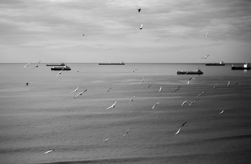 Water Sea Sky Flying Cloud - Sky Horizon Over Water Horizon Nature Vertebrate Beauty In Nature Animal Themes Animal Beach Bird Land Animal Wildlife Flock Of Birds Blackandwhite Black And White Black & White Pigeon Transportation Day Scenics - Nature Outdoors