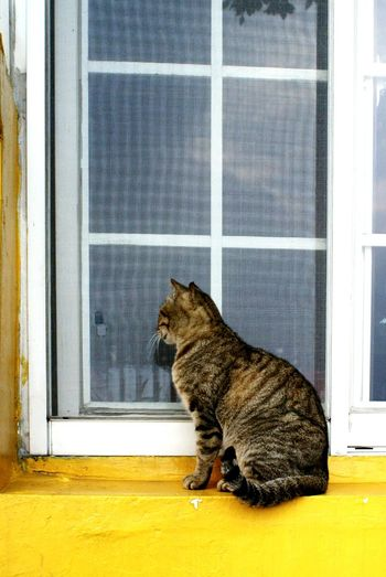 Cat Window Window Reflections Street Cat Streetphotography A Day In The Life Animals Cat Watching Catportrait Yellow