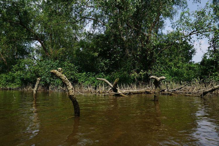 Flood Swamp