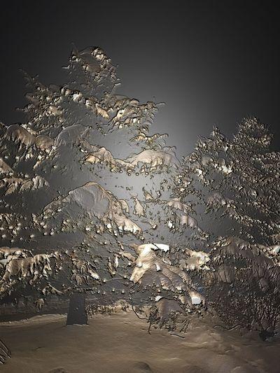 Ghost Snow. No