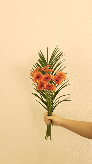 Close-up of hand holding plant in vase against wall